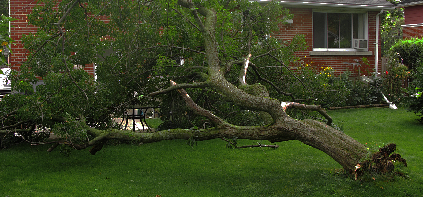 images/SOUTH_JERSEY_EMERGENCY_TREE_SERVICE.jpg